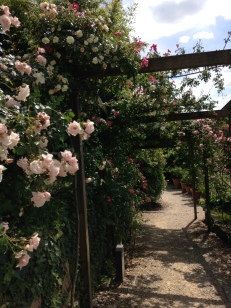 a rose covered walkway